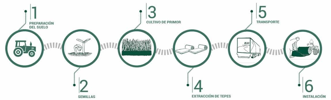 Cesped natural, circuito de cómo lo hacemos, desde la siembra hasta la instalación de los tepes