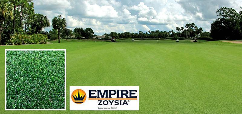 tepes-cesped-Zoysia-Empire