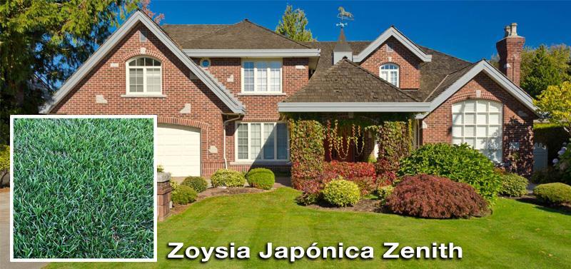 tepes-cesped-Zoysia-japonica