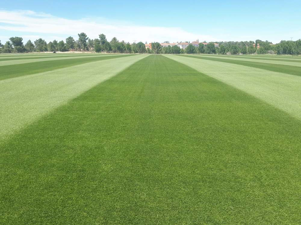 The Supercopa of Spain is played on the Grass of Novogreen